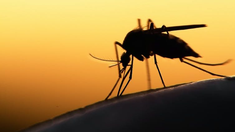 Silhouette of mosquito on human skin.