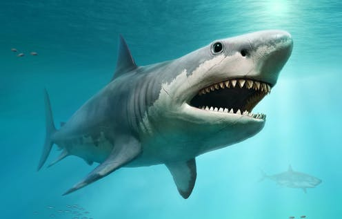 Giant ancient sharks had enormous babies that ate their siblings in the womb
