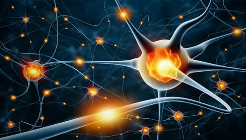 Alzheimer's: new research shows a leap forward in identifying neurons vulnerable to the disease